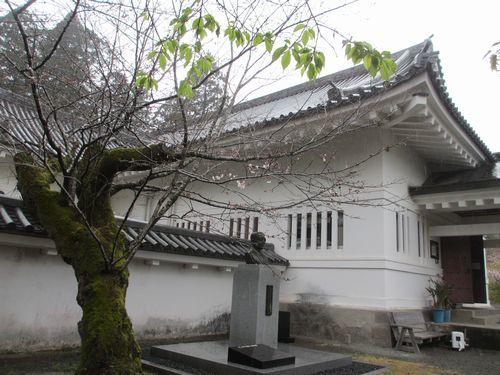IMG_7346ソメイヨシノ歴史資料館