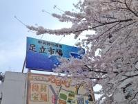 かどのめし屋海鮮食堂足立市場04