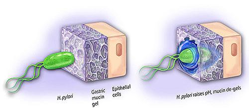 ヴォイニッチの科学書 第690回 地底戦車型に変形する菌を発見