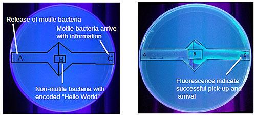 ヴォイニッチの科学書 第694回 バクテリアで文字の読み書きに成功