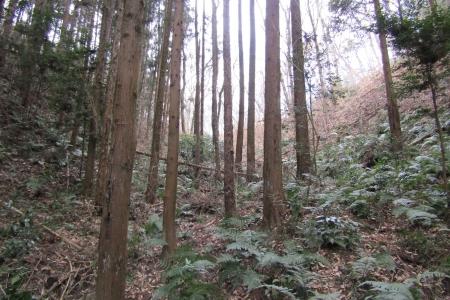 180212天王山~唐沢山 (4)s