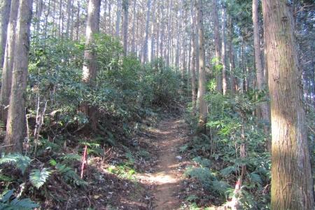 180224愛宕山~金比羅山~弓立山~弘法山 (22)s