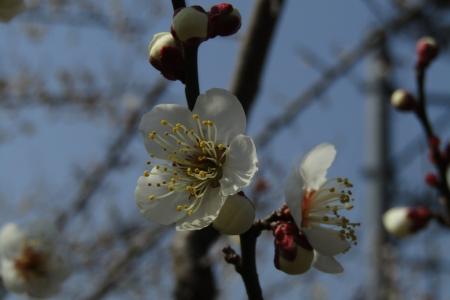 180224愛宕山~金比羅山~弓立山~弘法山 (45)s