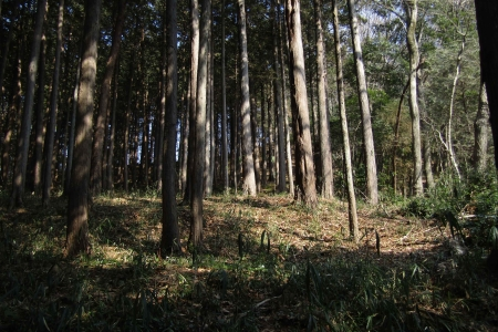 180224愛宕山~金比羅山~弓立山~弘法山 (46)s
