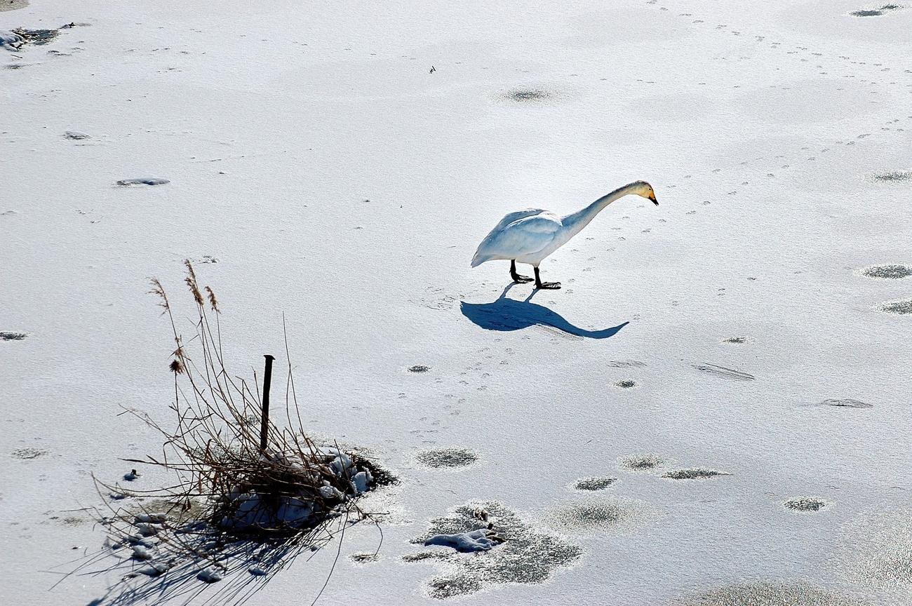 平成18年2月4日(土)零下14℃ 234s