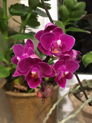 orchid030118.jpg
