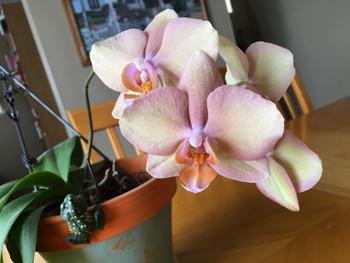 orchid03201801.jpg
