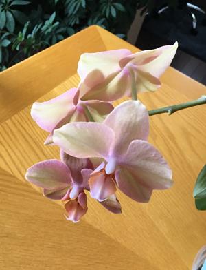 orchid03201802.jpg