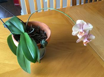 orchid03201803.jpg