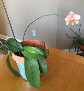 orchid1810.jpg