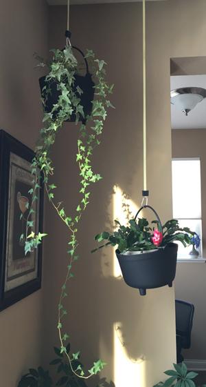 orchid1812.jpg