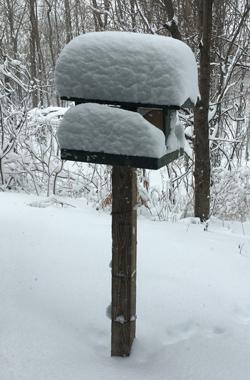 snow03061803.jpg