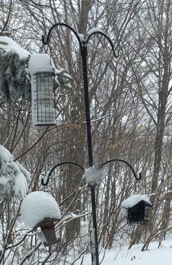 snow03061804.jpg