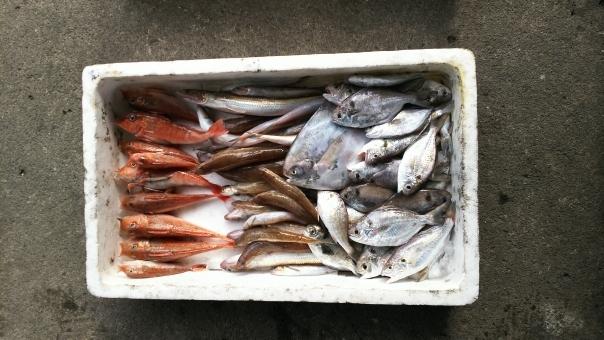 【福島第一】魚から「セシウム」を検出…操業範囲外で基準値超