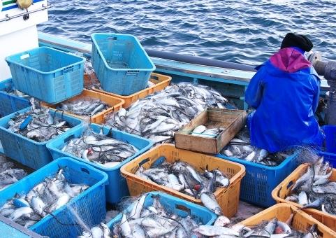 fish_nishin5385.jpg
