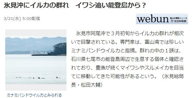 【日本海】富山・氷見沖にイルカの群れが出現…富山湾では珍しい「ミナミバンドウイルカ」