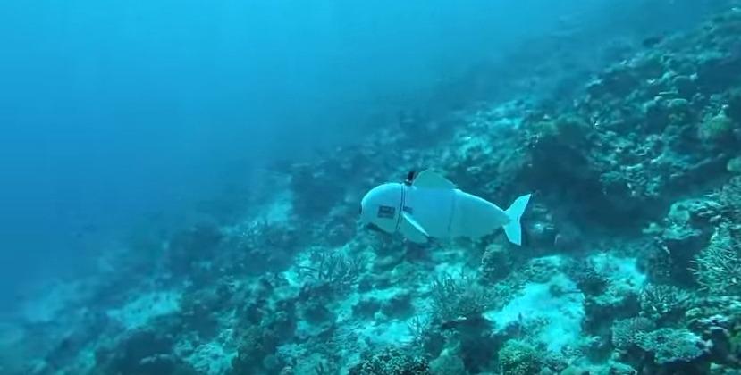 【アメリカ】サンゴ礁の中を泳ぐ「海中探査用ロボット」を開発…これで擬態もバッチリ