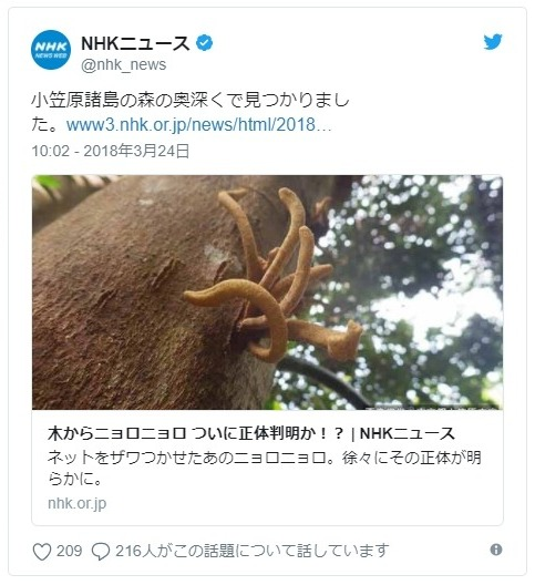 【小笠原諸島】去年、ネットで話題になった木から生えた「謎のニョロニョロ」…ついに正体判明か?