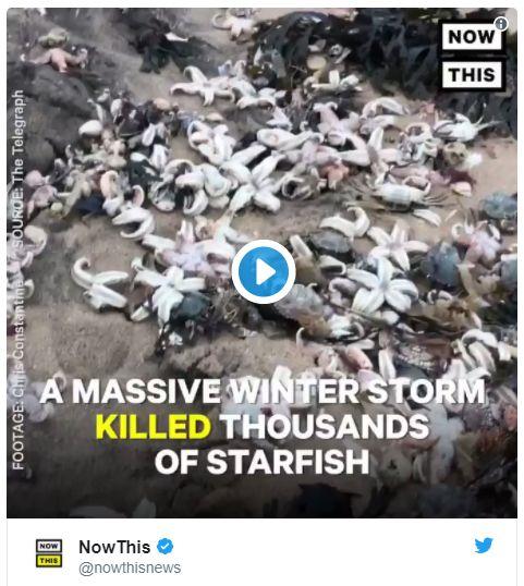 【イギリス】イングランドの海岸にヒトデやカニなどが大量打ち上げ…数万匹が海岸を覆い尽くす
