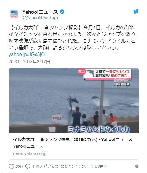 【前触れ】鹿児島で堤防のすぐそばを泳ぎ、ジャンプしている不思議な「イルカの群れ」を発見…専門家「なかなか見れない行動」大群によるジャンプは珍しい