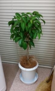 1観葉植物 (2)