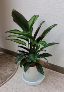 3観葉植物 (2)