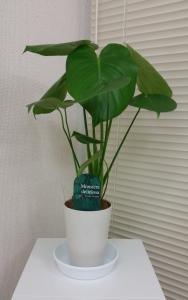 2観葉植物 (2)