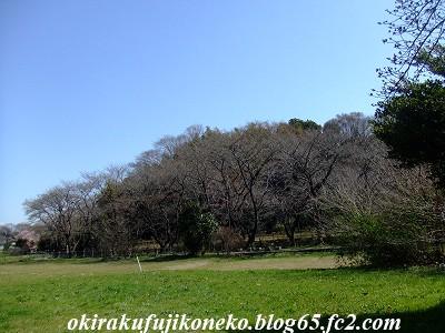 0317桜2