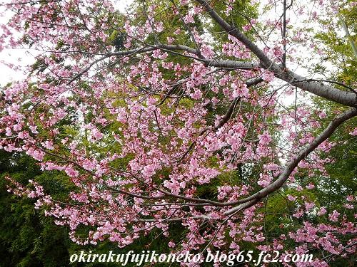 319早桜1