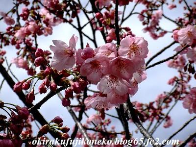 323桜ピンク1