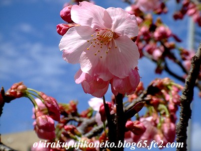 323桜ピンク2