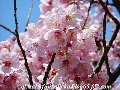 325桜10