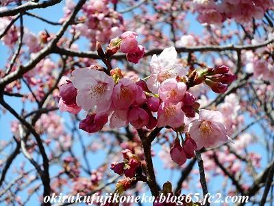 325桜11