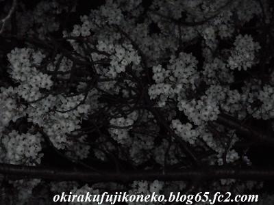 327夜桜2