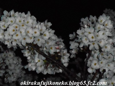327夜桜3