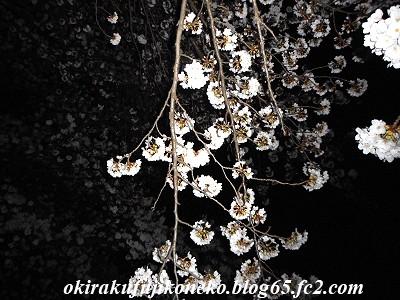 327夜桜4