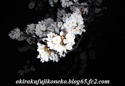 327夜桜5