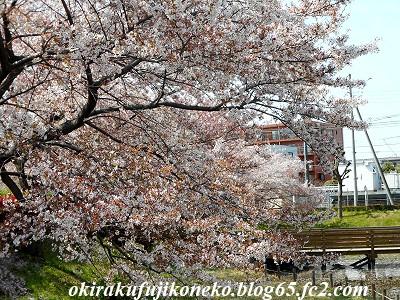 401井沼方桜1