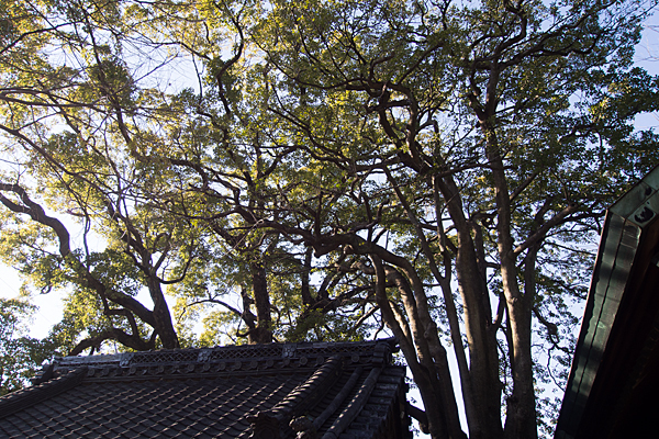 八幡社児子社境内の木々