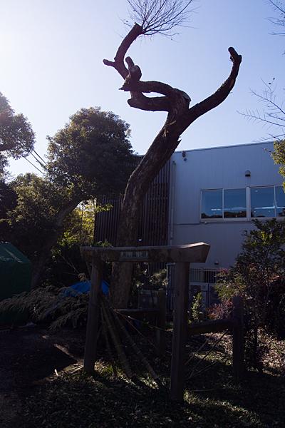 喚續社イチョウの木