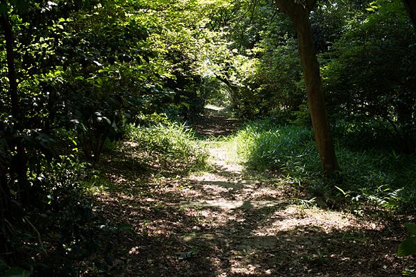 加佐登神社古墳への道