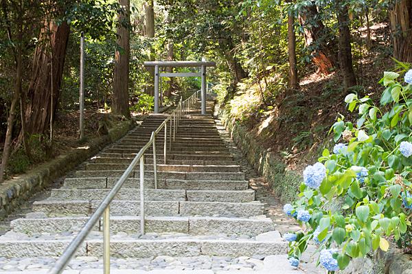 加佐登神社階段の参道とアジサイ