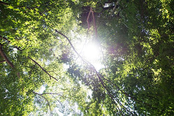 加佐登神社緑と太陽