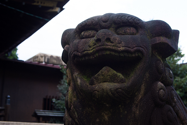 本土神社獅子