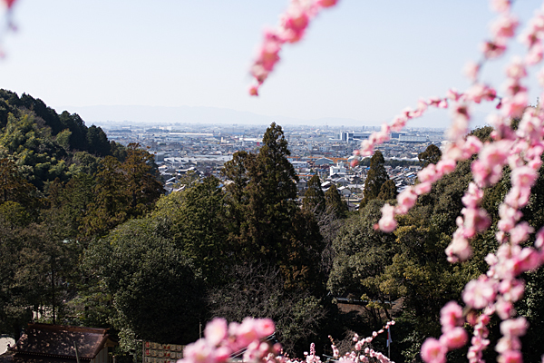 大縣神社しだれ梅高台から見る風景