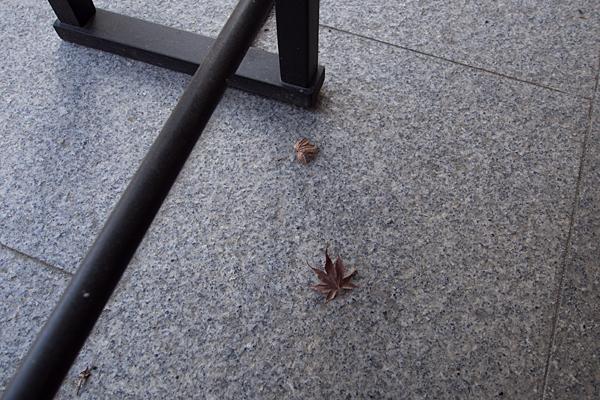 泉増院枯れモミジ