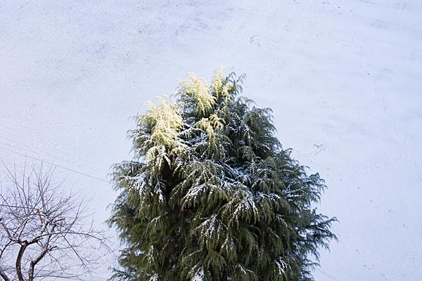 雪が積もった日
