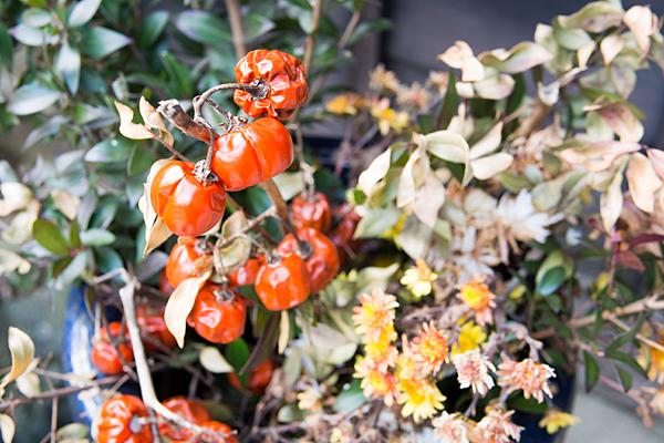 冬の花と実