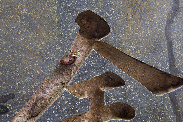 犬山寂光院石柱と抜け殻