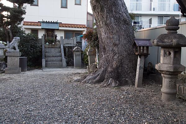 山木秋葉神社境内と木と社と猫